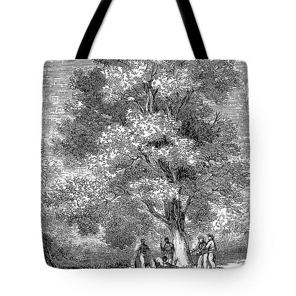 Sugar-maple Tree Tote Bag