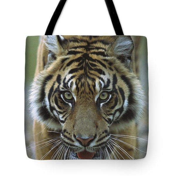 Sumatran Tiger Panthera Tigris Sumatrae Tote Bag by Zssd