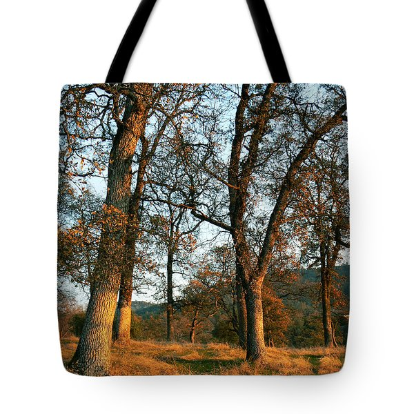 Sun Kissed Oaks Tote Bag by Pamela Patch