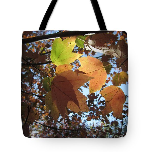 Tote Bag featuring the photograph Sun-lite Fall Leaves by Donna Brown