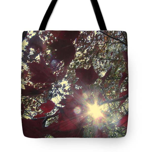 Tote Bag featuring the photograph Sun Shine Through by Donna Brown