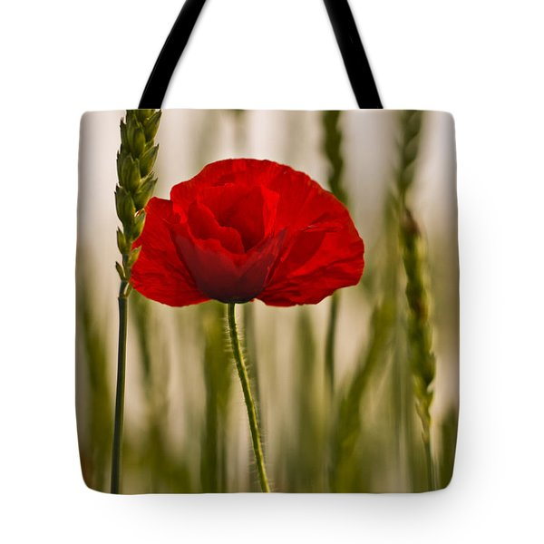 Sunset Glow. Tote Bag by Clare Bambers
