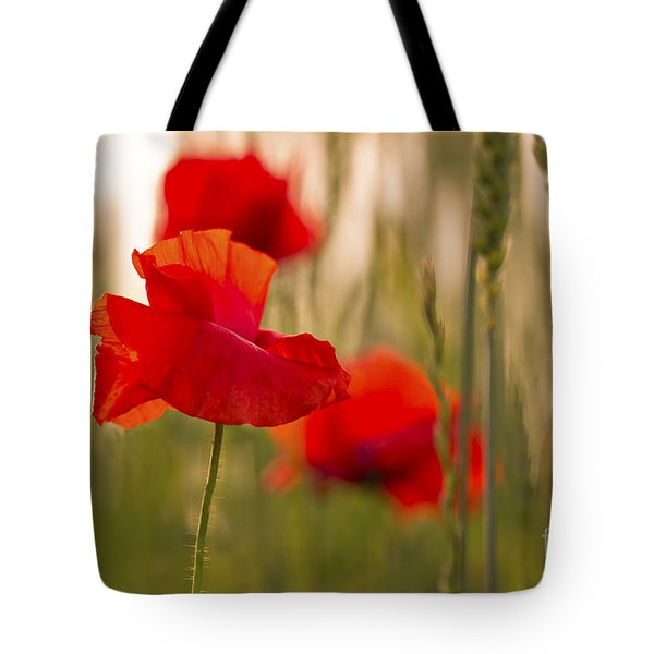 Sunset Poppies. Tote Bag by Clare Bambers