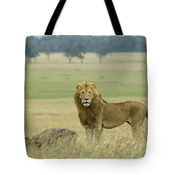 Surveying His Kingdom Tote Bag by Michele Burgess