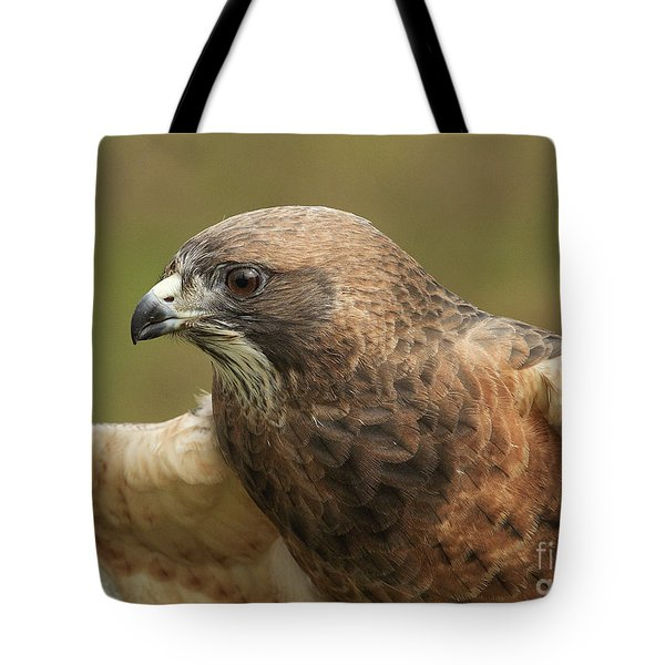Tote Bag featuring the photograph Swainson's Hawk by Doug Herr
