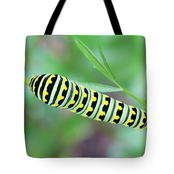 Swallowtail Caterpillar On Parsley Tote Bag
