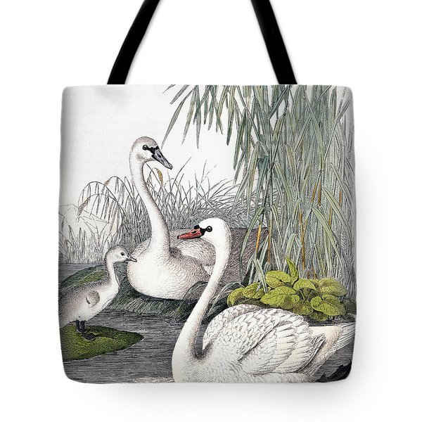 Swans, C1850 Tote Bag by Granger