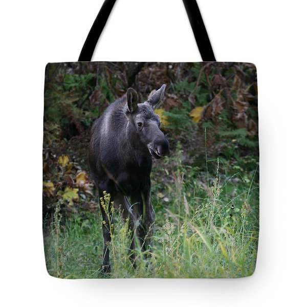 Tote Bag featuring the photograph Sweet Face by Doug Lloyd