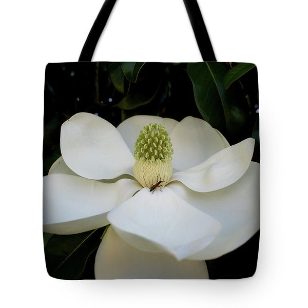 Tote Bag featuring the photograph Sweet Magnolia by Paul Mashburn