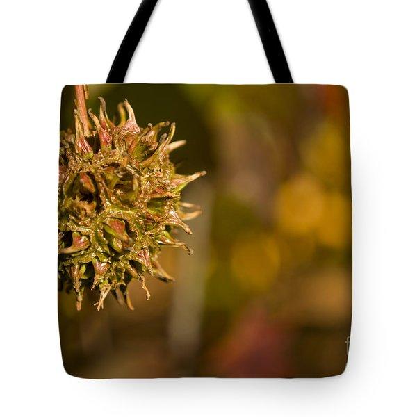 Sweetgum Seed Pod Tote Bag by Heather Applegate
