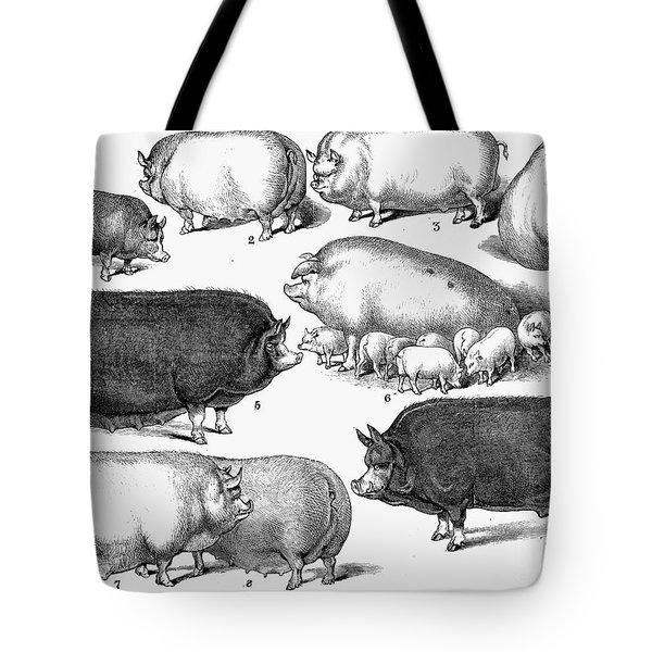 Swine, 1876 Tote Bag by Granger