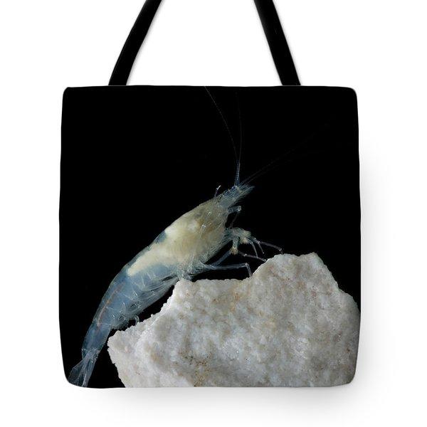 Taiji Cave Shrimp Tote Bag