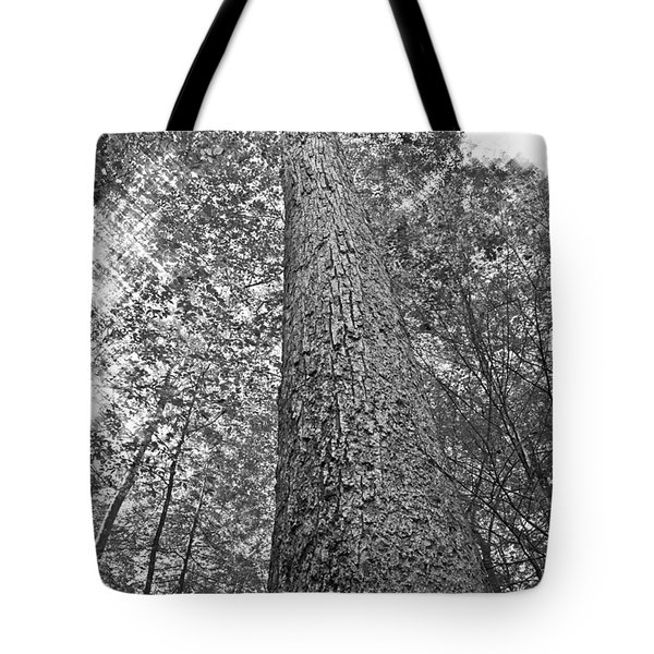 Tote Bag featuring the photograph Tall Tree With Sunshine by Susan Leggett
