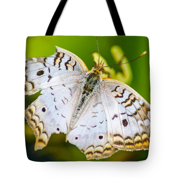 Tote Bag featuring the photograph Tattered Moth by Shannon Harrington