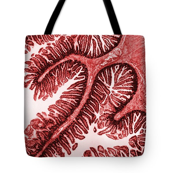 Tem Of Intestinal Villi Tote Bag by Science Source