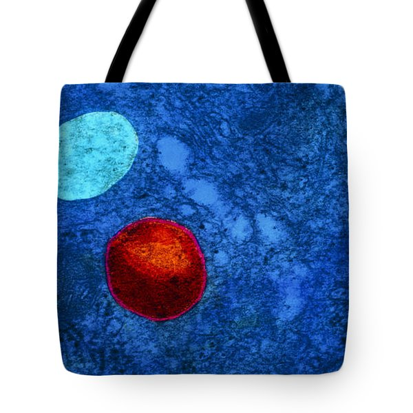 Tem Of Primary Lysosome In Liver Cellsc7036 Tote Bag by CNRI and SPL and Photo Researchers