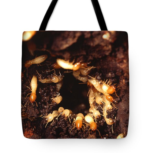 Termite Nest Tote Bag by Science Source