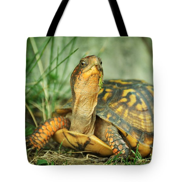 Terrapene Carolina Eastern Box Turtle Tote Bag by Rebecca Sherman