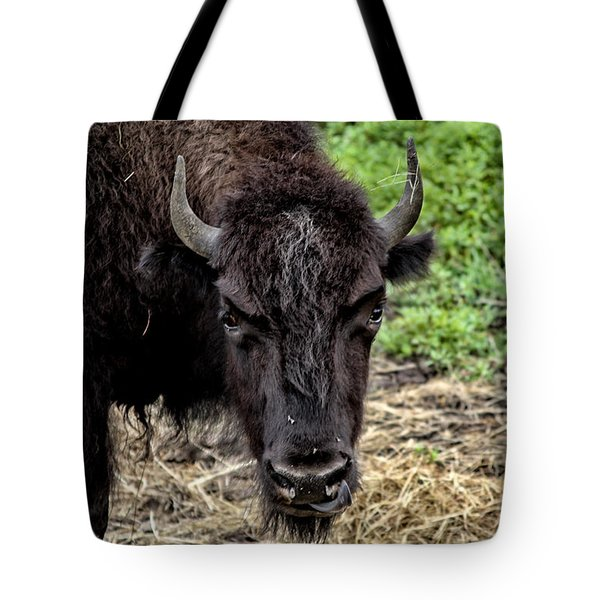 The Bison Stare Tote Bag by Karol Livote