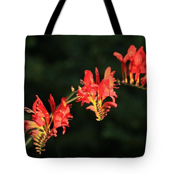 The Hydra Tote Bag by Winston Rockwell
