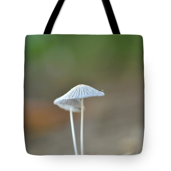 The Mushrooms Tote Bag by JD Grimes