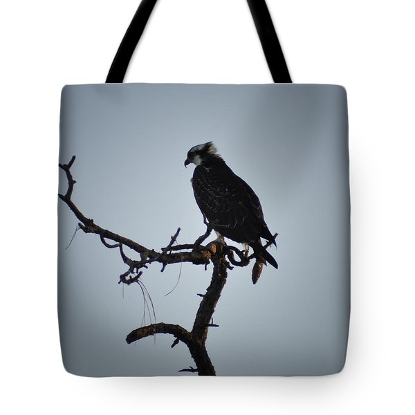 The Osprey Tote Bag by Bill Cannon