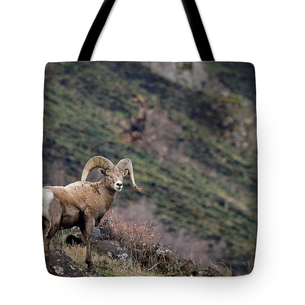 Tote Bag featuring the photograph The Overlook by Steve McKinzie