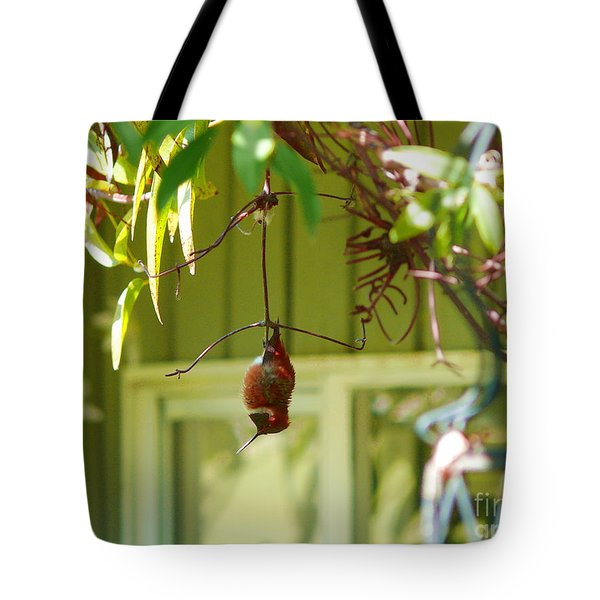 The Sleeping Hummingbird Tote Bag by Gail Bridger