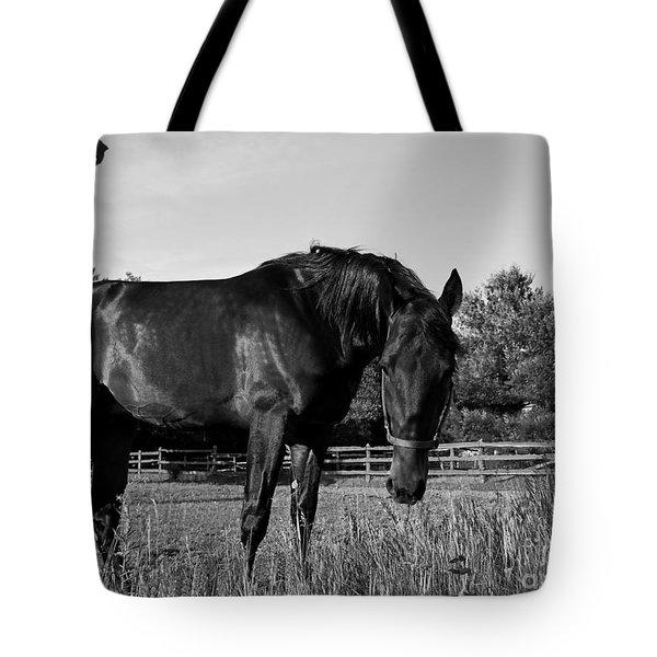 The Stallion Tote Bag by Davandra Cribbie