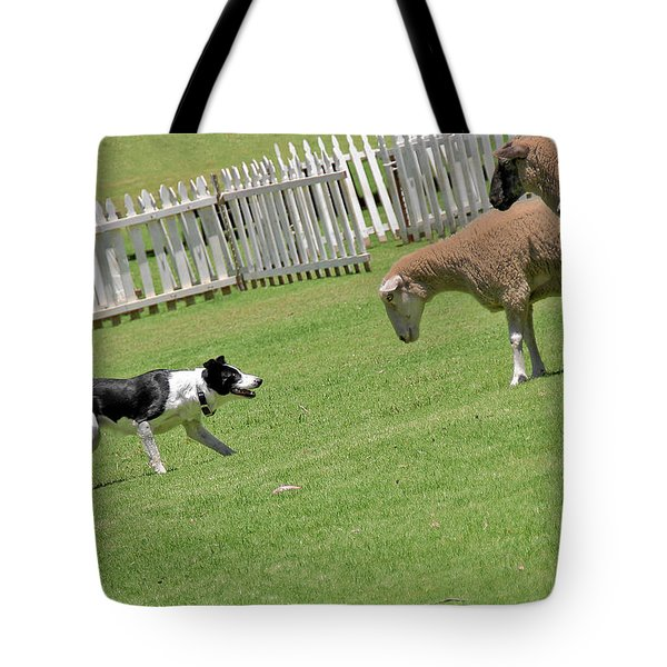 The Stare - Border Collie At Work Tote Bag by Christine Till