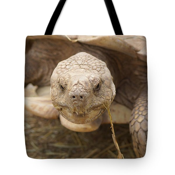 The Tortoise  Tote Bag by J Jaiam