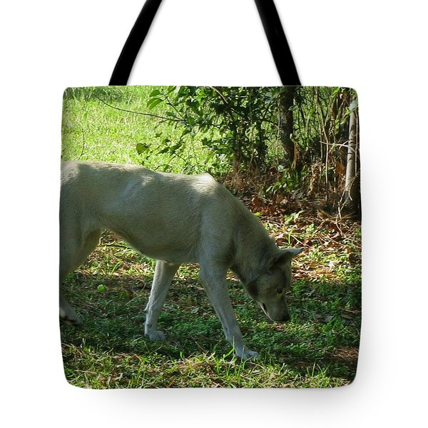 Tote Bag featuring the photograph The Tracker by Maria Urso