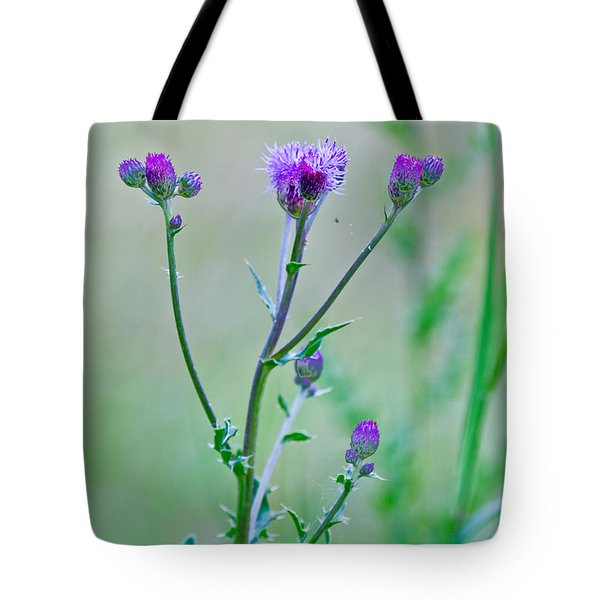 Thistledown Pastel Passion Tote Bag