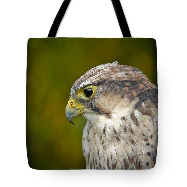 Thoughtful Kestrel Tote Bag