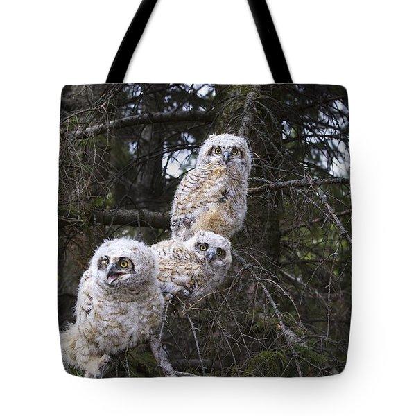 Three Great Horned Owl Bubo Virginianus Tote Bag by Richard Wear