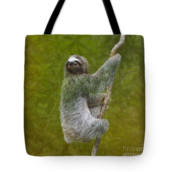 Three-toed Sloth Climbing Tote Bag by Heiko Koehrer-Wagner