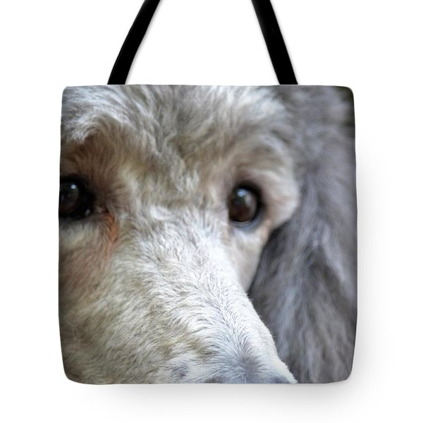 Through Dusty's Eyes Tote Bag by Maria Urso