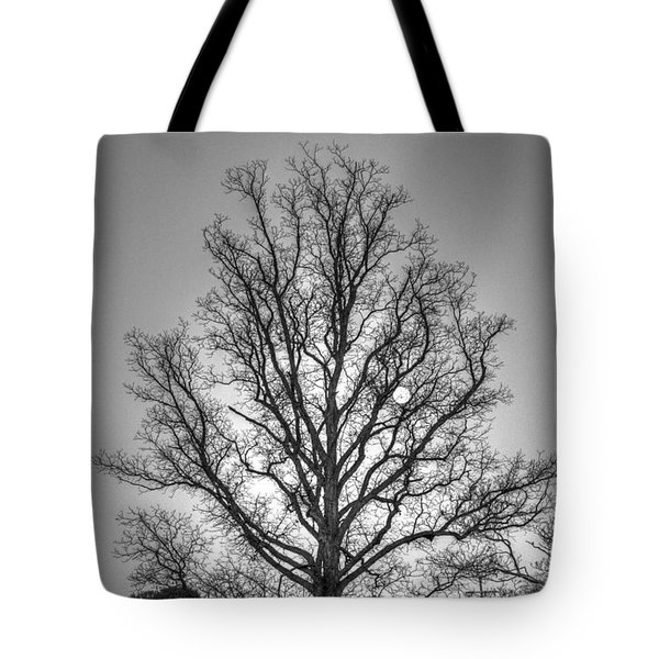 Through The Boughs Bw Tote Bag by Dan Stone