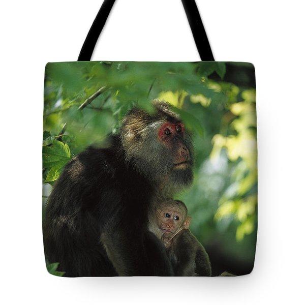 Tibetan Macaque Nursing Baby Tote Bag by Cyril Ruoso