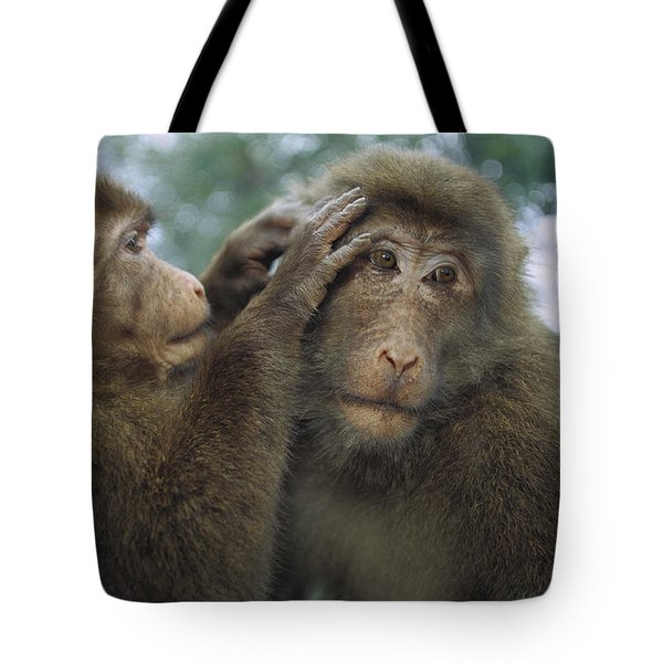 Tibetan Macaques Grooming Tote Bag by Cyril Ruoso