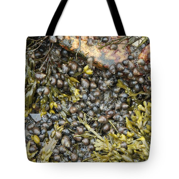 Tidal Pool With Rockweed Tote Bag by Ted Kinsman