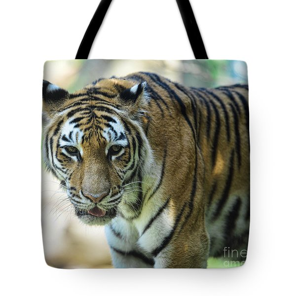 Tiger - Endangered - Wildlife Rescue Tote Bag by Paul Ward