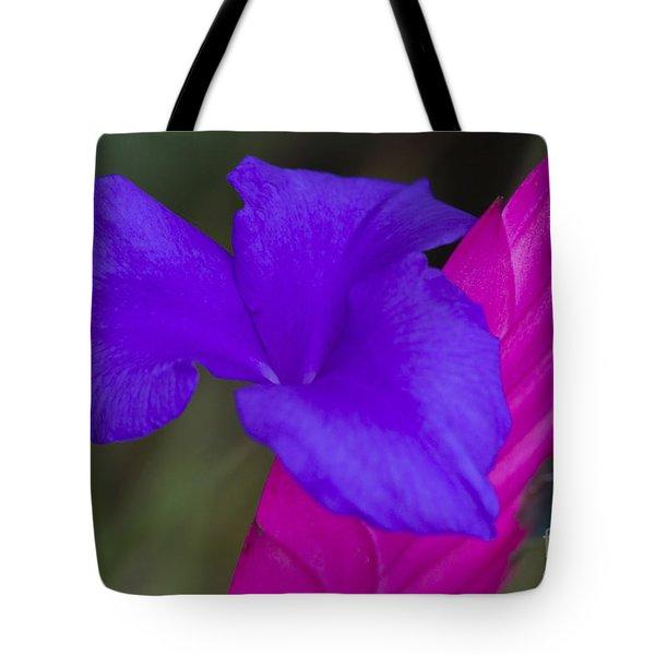 Tillandsia Cyanea Tote Bag by Heiko Koehrer-Wagner
