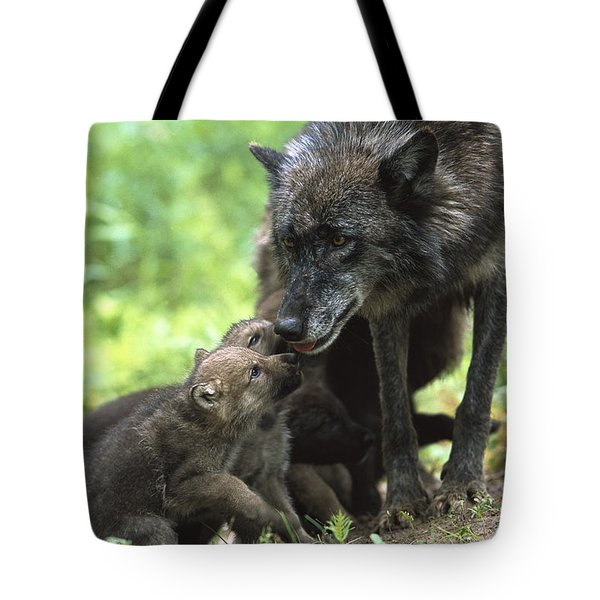 Timber Wolf Canis Lupus Mother Tote Bag by Konrad Wothe