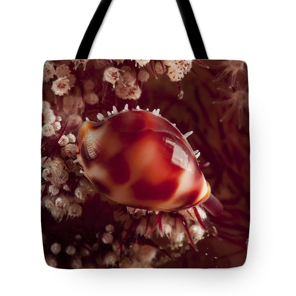Tiny Cowrie Shell On Dendronephtya Soft Tote Bag by Mathieu Meur