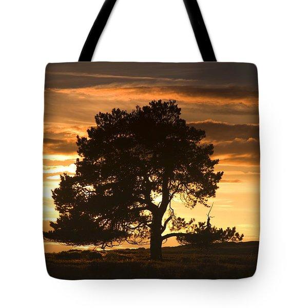 Tree At Sunset, North Yorkshire, England Tote Bag by John Short