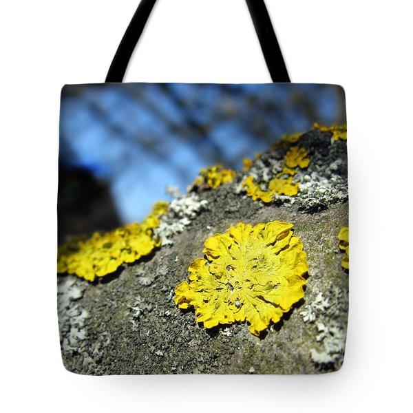 Tote Bag featuring the photograph Tree Lichen by Ausra Huntington nee Paulauskaite