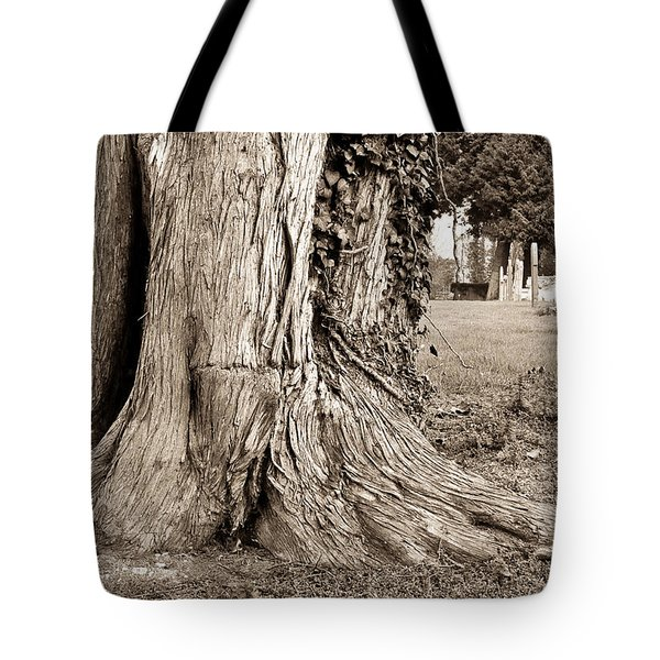 Tree Trunk Tote Bag by Tom Gowanlock
