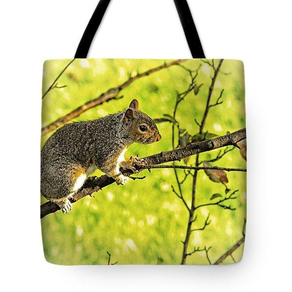 Tree Visitor Tote Bag by Karol Livote