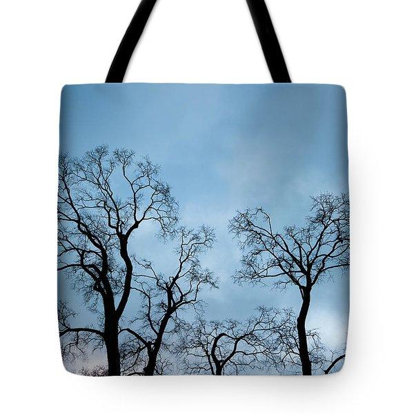 Trees. Autumn. Tote Bag by Konstantin Dikovsky